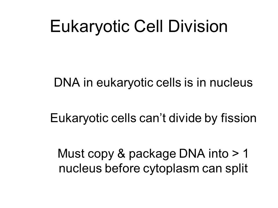 Eukaryotic Cell Division DNA in eukaryotic cells is in nucleus Eukaryotic cells can't divide by fission Must copy & package DNA into > 1 nucleus before cytoplasm can split