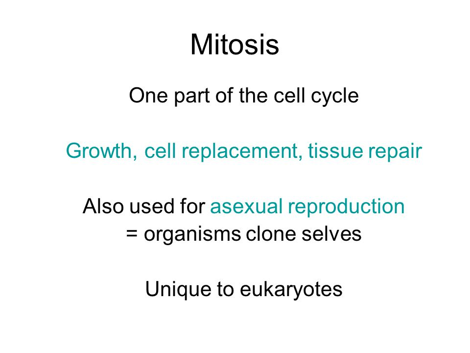 Mitosis One part of the cell cycle Growth, cell replacement, tissue repair Also used for asexual reproduction = organisms clone selves Unique to eukaryotes