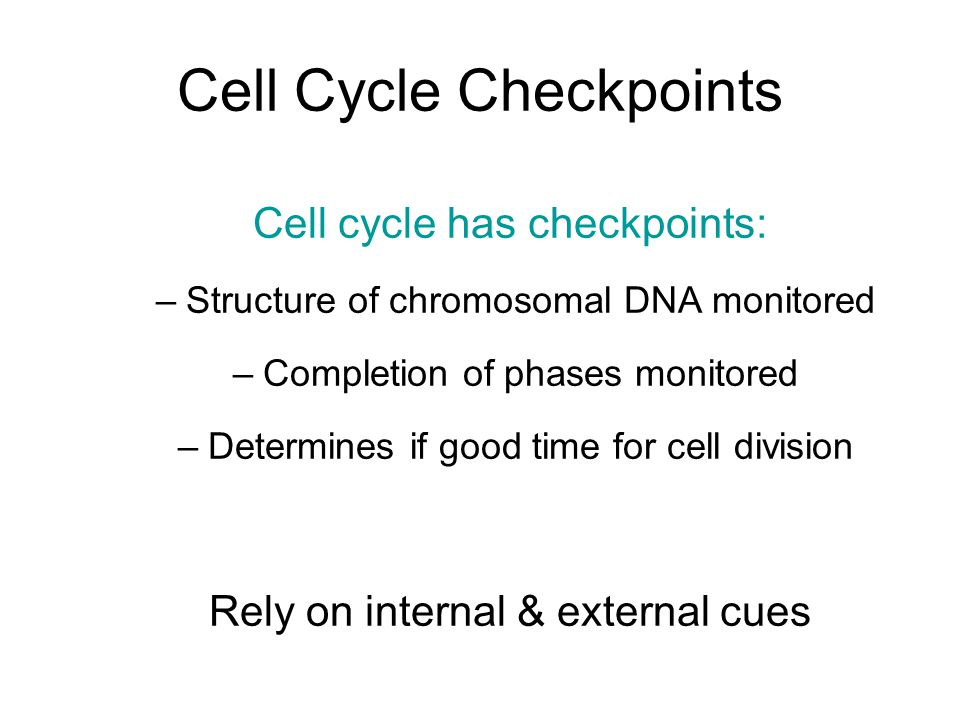 Cell Cycle Checkpoints Cell cycle has checkpoints: –Structure of chromosomal DNA monitored –Completion of phases monitored –Determines if good time for cell division Rely on internal & external cues