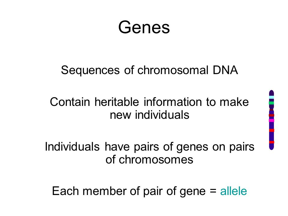 Genes Sequences of chromosomal DNA Contain heritable information to make new individuals Individuals have pairs of genes on pairs of chromosomes Each member of pair of gene = allele