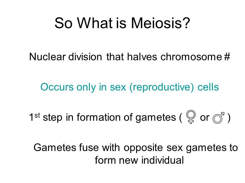 So What is Meiosis.