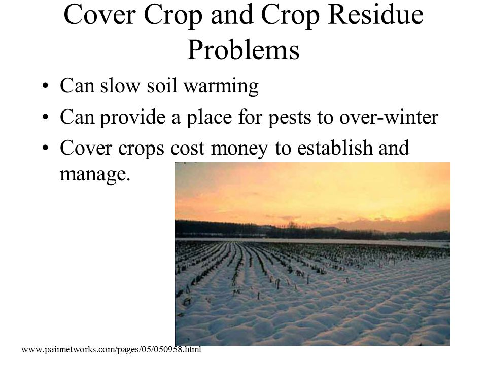 Cover Crop and Crop Residue Problems Can slow soil warming Can provide a place for pests to over-winter Cover crops cost money to establish and manage.