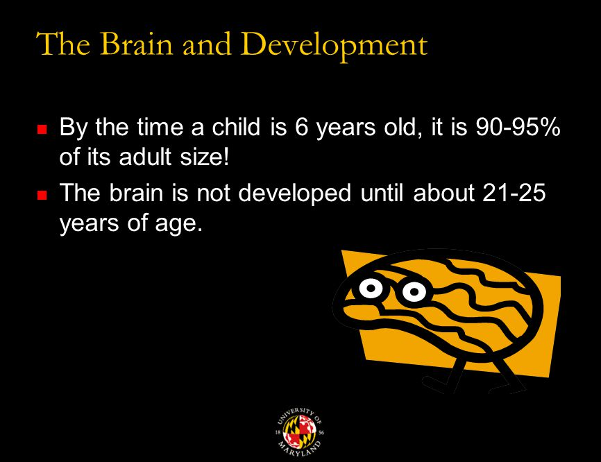 The Brain and Development By the time a child is 6 years old, it is 90-95% of its adult size.