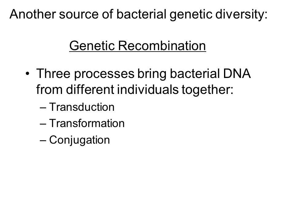 Another source of bacterial genetic diversity: Genetic Recombination Three processes bring bacterial DNA from different individuals together: –Transduction –Transformation –Conjugation