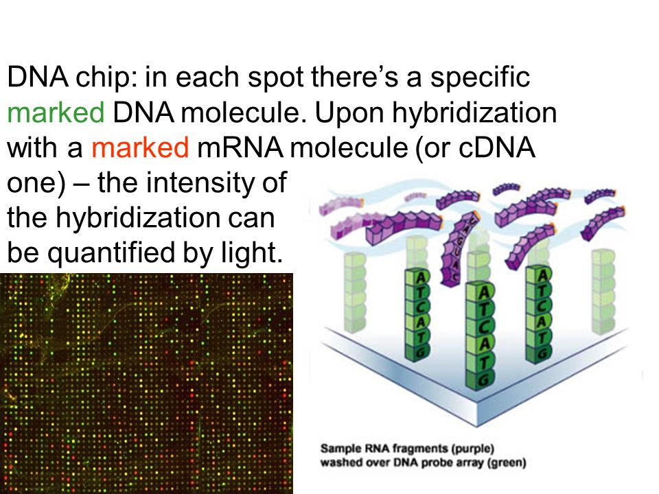 DNA chip: in each spot there's a specific marked DNA molecule.
