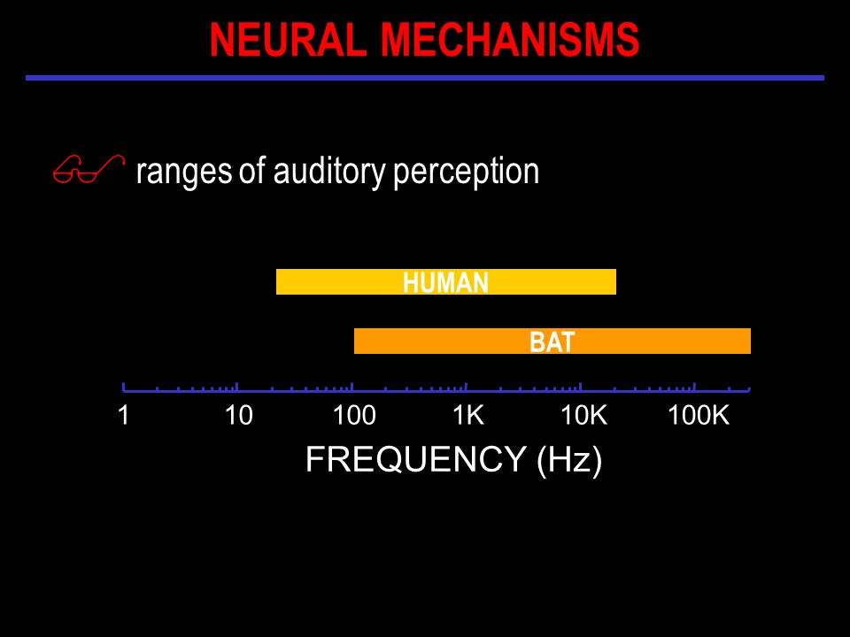 $ ranges of auditory perception K10K100K FREQUENCY (Hz) HUMAN BAT NEURAL MECHANISMS