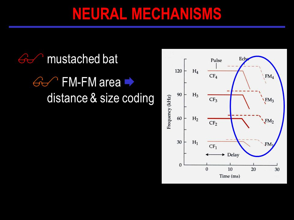$ mustached bat $ FM-FM area  distance & size coding NEURAL MECHANISMS