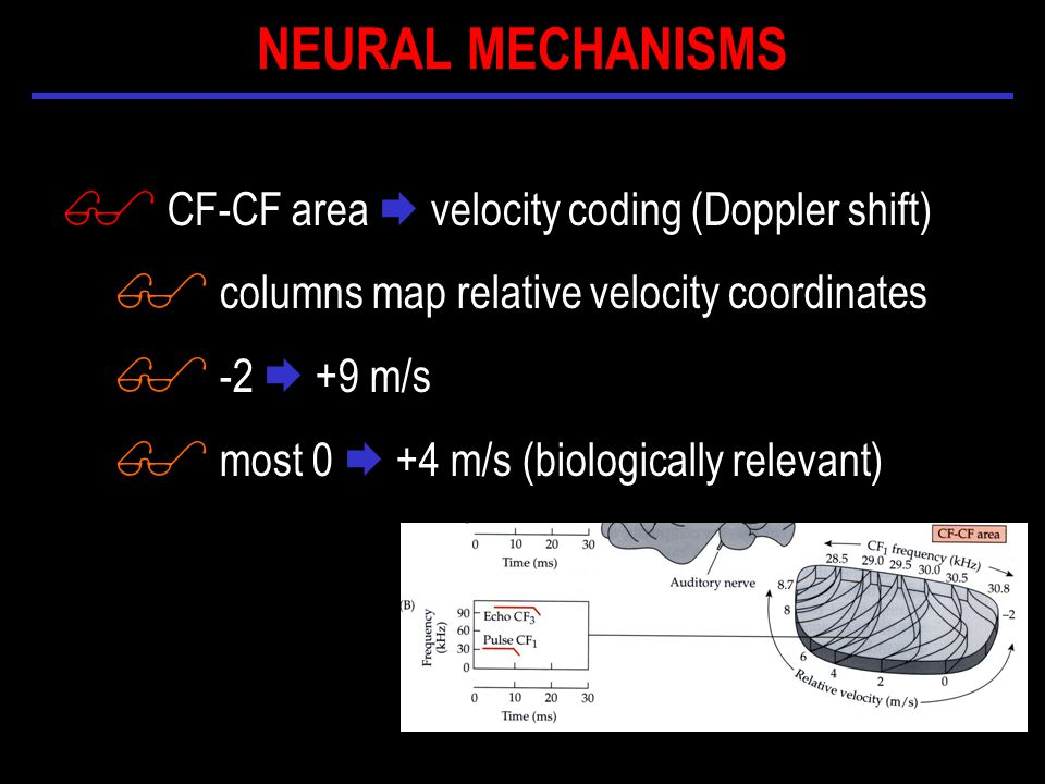 $ CF-CF area  velocity coding (Doppler shift) $ columns map relative velocity coordinates $ -2  +9 m/s $ most 0  +4 m/s (biologically relevant) NEURAL MECHANISMS