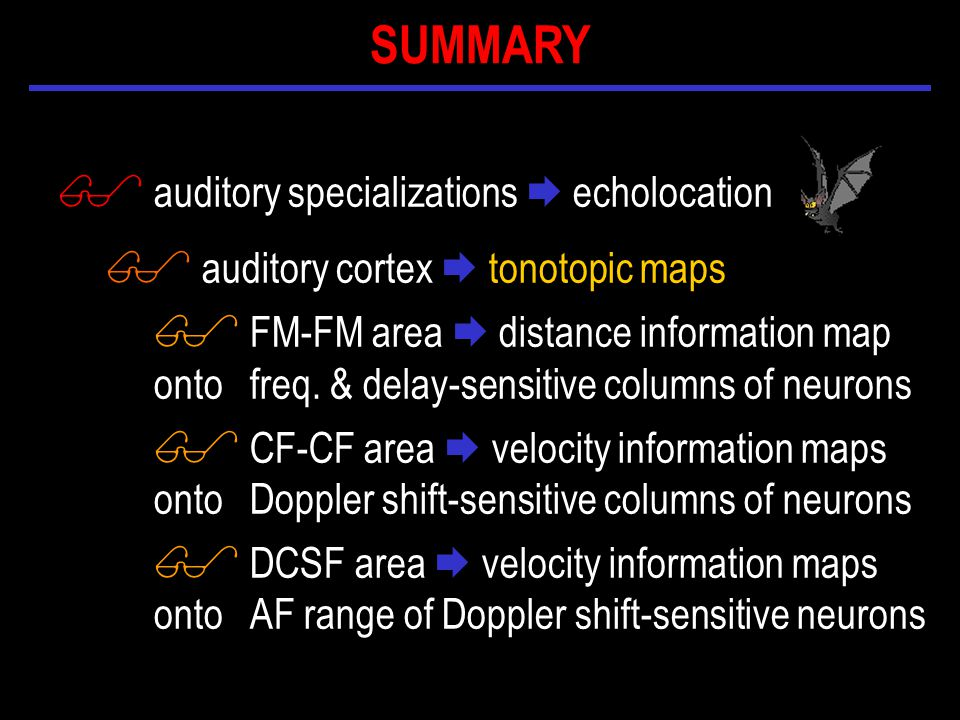 $ auditory specializations  echolocation $ auditory cortex  tonotopic maps $ FM-FM area  distance information map onto freq.
