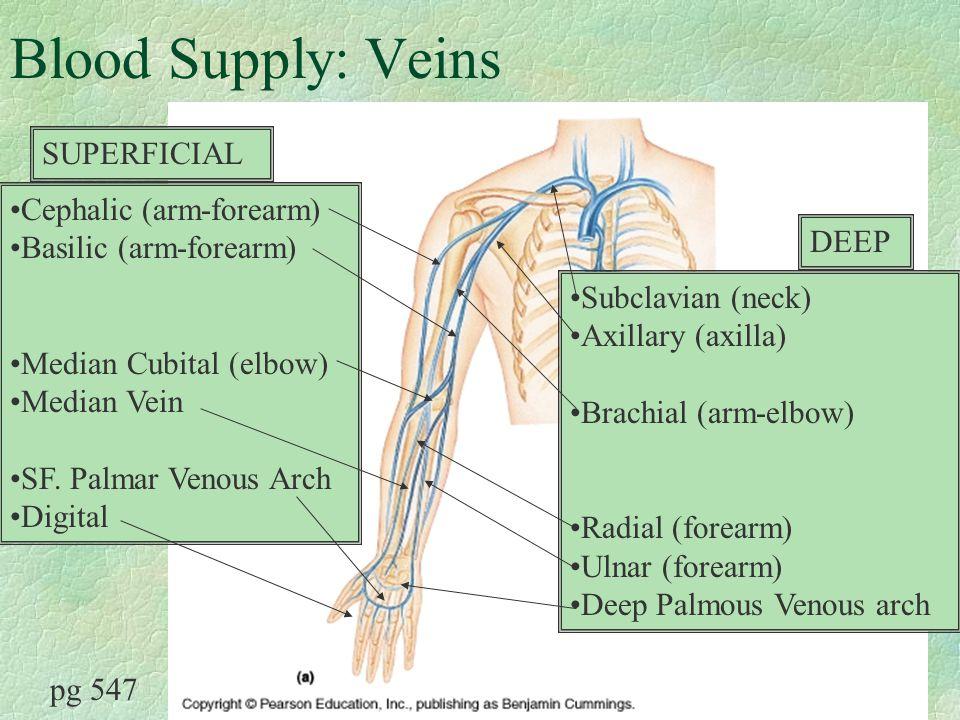 the upper extremity arm muscles, axilla, brachial plexus. - ppt, Cephalic Vein
