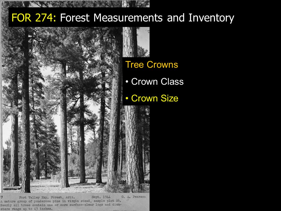 FOR 274: Forest Measurements and Inventory Tree Crowns Crown Class Crown Size