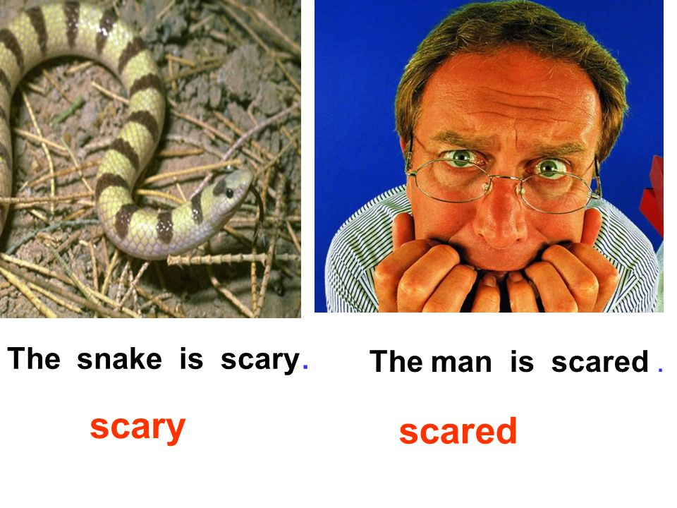 The man is scared. scared scary The snake is scary.