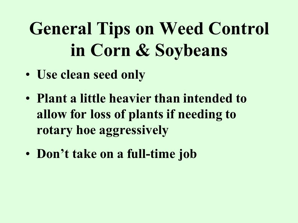 General Tips on Weed Control in Corn & Soybeans Use clean seed only Plant a little heavier than intended to allow for loss of plants if needing to rotary hoe aggressively Don't take on a full-time job