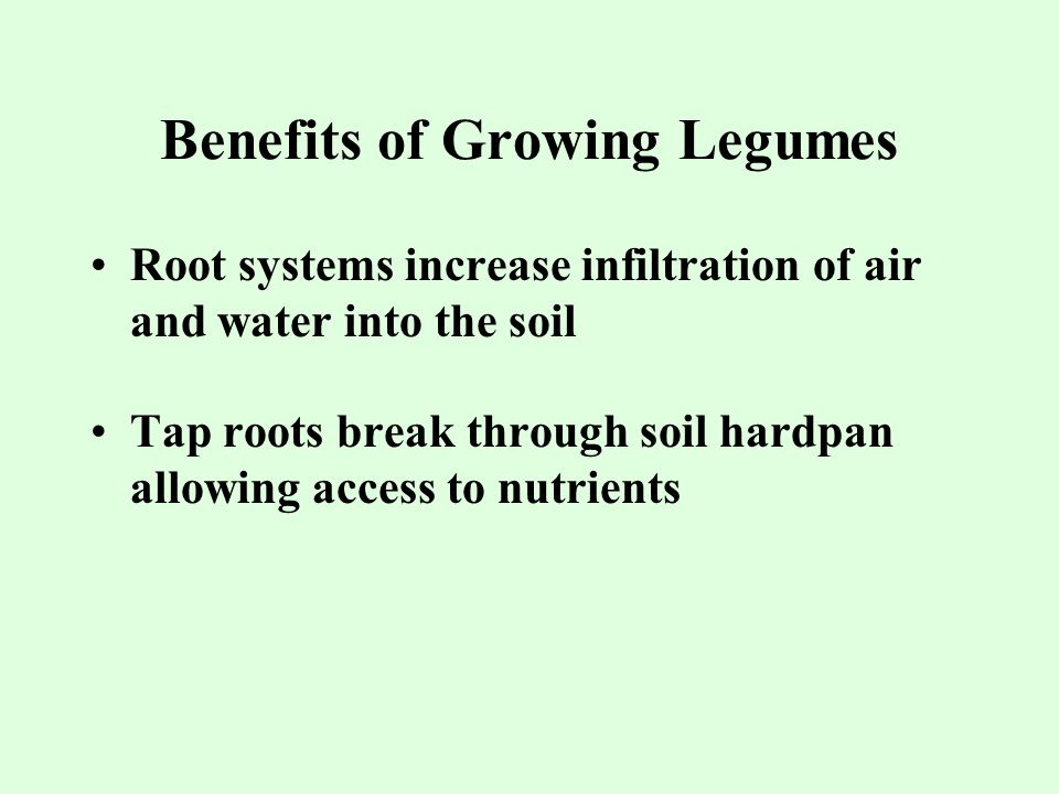Benefits of Growing Legumes Root systems increase infiltration of air and water into the soil Tap roots break through soil hardpan allowing access to nutrients