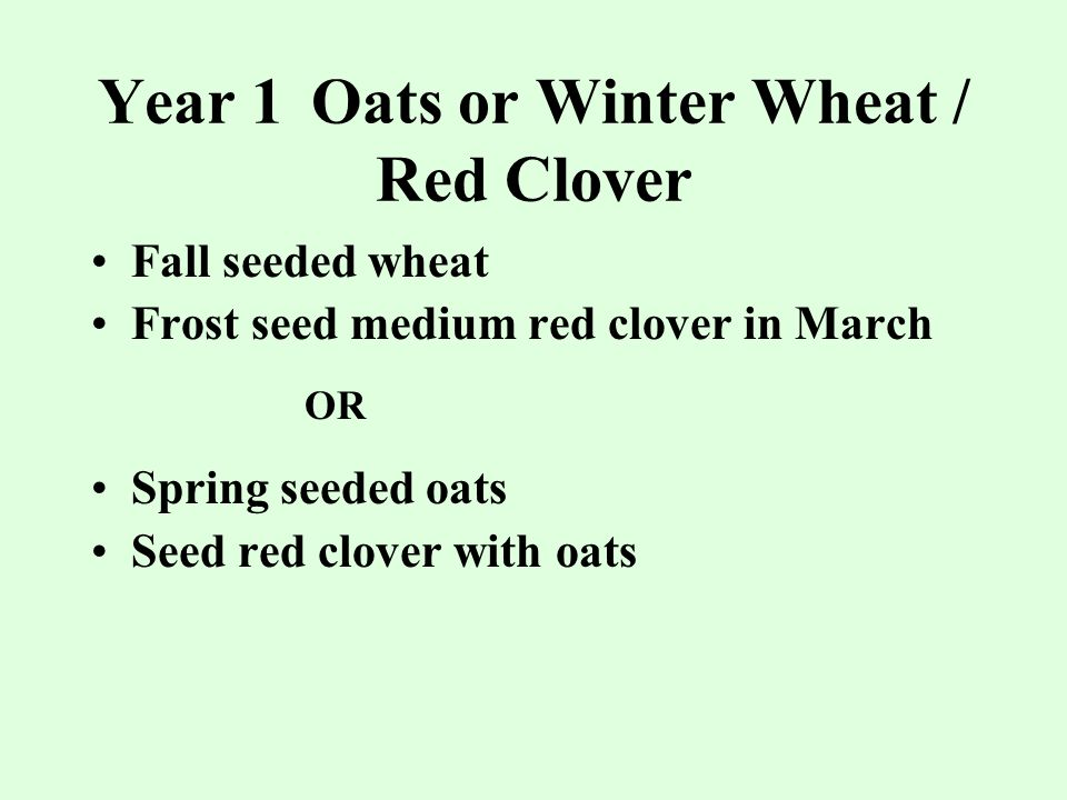 Year 1Oats or Winter Wheat / Red Clover Fall seeded wheat Frost seed medium red clover in March OR Spring seeded oats Seed red clover with oats