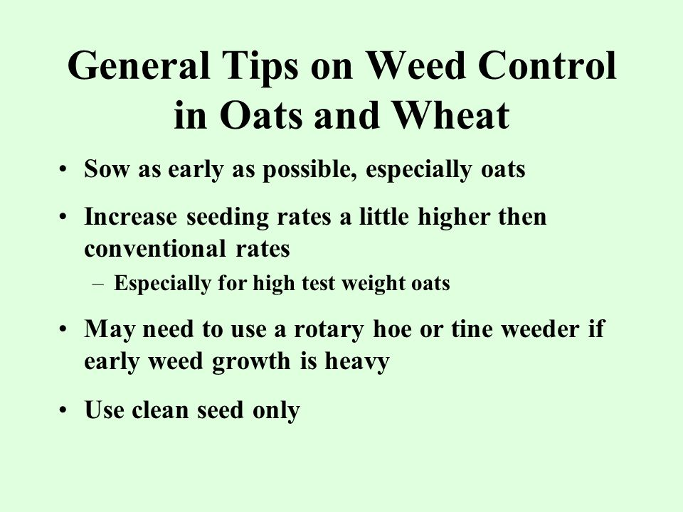 General Tips on Weed Control in Oats and Wheat Sow as early as possible, especially oats Increase seeding rates a little higher then conventional rates –Especially for high test weight oats May need to use a rotary hoe or tine weeder if early weed growth is heavy Use clean seed only