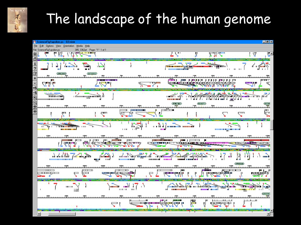 The landscape of the human genome