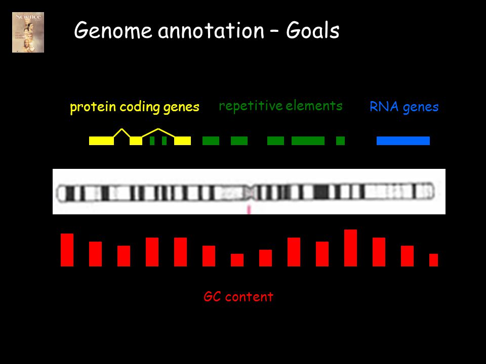 Genome annotation – Goals protein coding genesRNA genes repetitive elements GC content