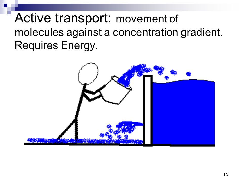 15 Active transport: movement of molecules against a concentration gradient. Requires Energy.