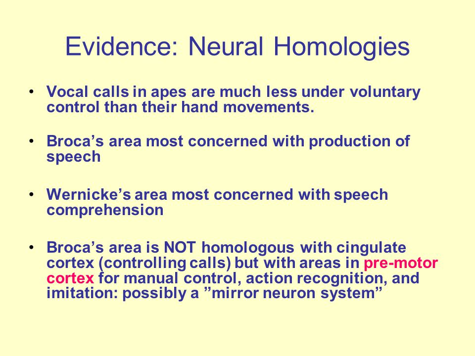 Evidence: Neural Homologies Vocal calls in apes are much less under voluntary control than their hand movements.