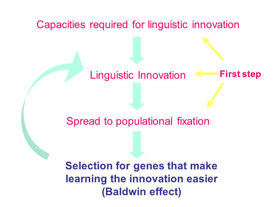 Capacities required for linguistic innovation Linguistic Innovation Spread to populational fixation Selection for genes that make learning the innovation easier (Baldwin effect) First step