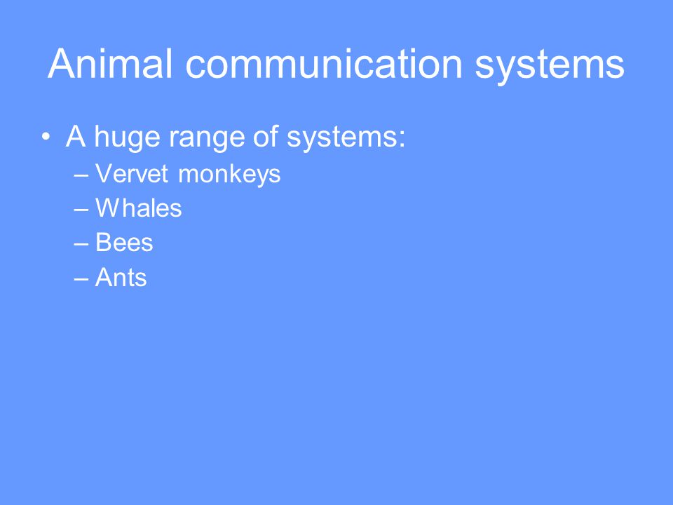 Animal communication systems A huge range of systems: –Vervet monkeys –Whales –Bees –Ants