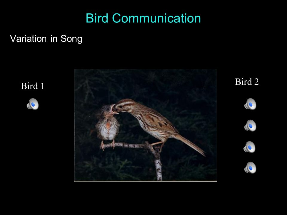 Bird Communication Sparrow Song song call Song is highly structured - notes, syllables, phrases