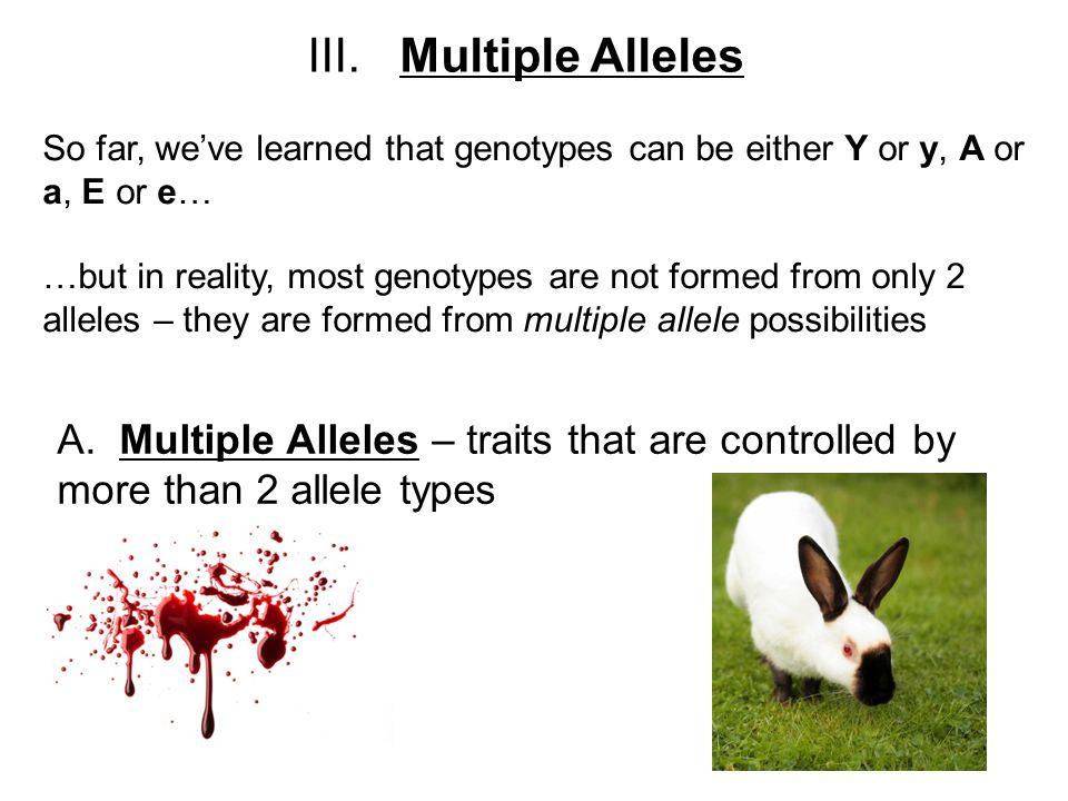 Abo Multiple Allele Worksheet Answers multiple alleles worksheet – Multiple Allele Worksheet