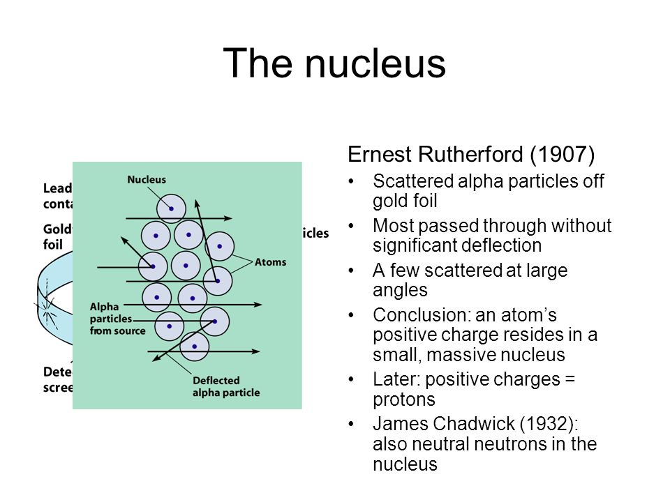 The nucleus Ernest Rutherford (1907) Scattered alpha particles off gold foil Most passed through without significant deflection A few scattered at large angles Conclusion: an atom's positive charge resides in a small, massive nucleus Later: positive charges = protons James Chadwick (1932): also neutral neutrons in the nucleus