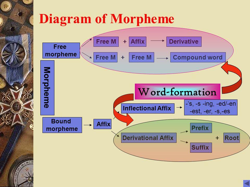 Diagram of Morpheme Morpheme Free M Free morpheme Affix Derivative Free M Compound word Bound morpheme Inflectional Affix Derivational Affix Prefix Suffix -'s, -s -ing, -ed/-en -est, -er, -s,-es Affix + + + Root Word-formation
