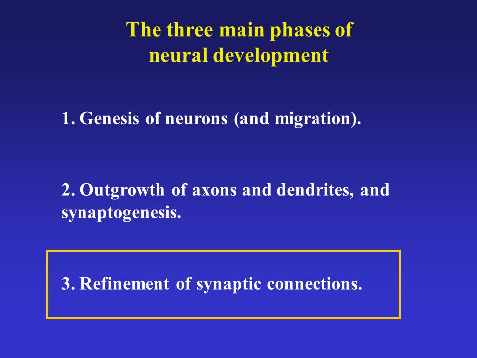 The three main phases of neural development 1. Genesis of neurons (and migration).
