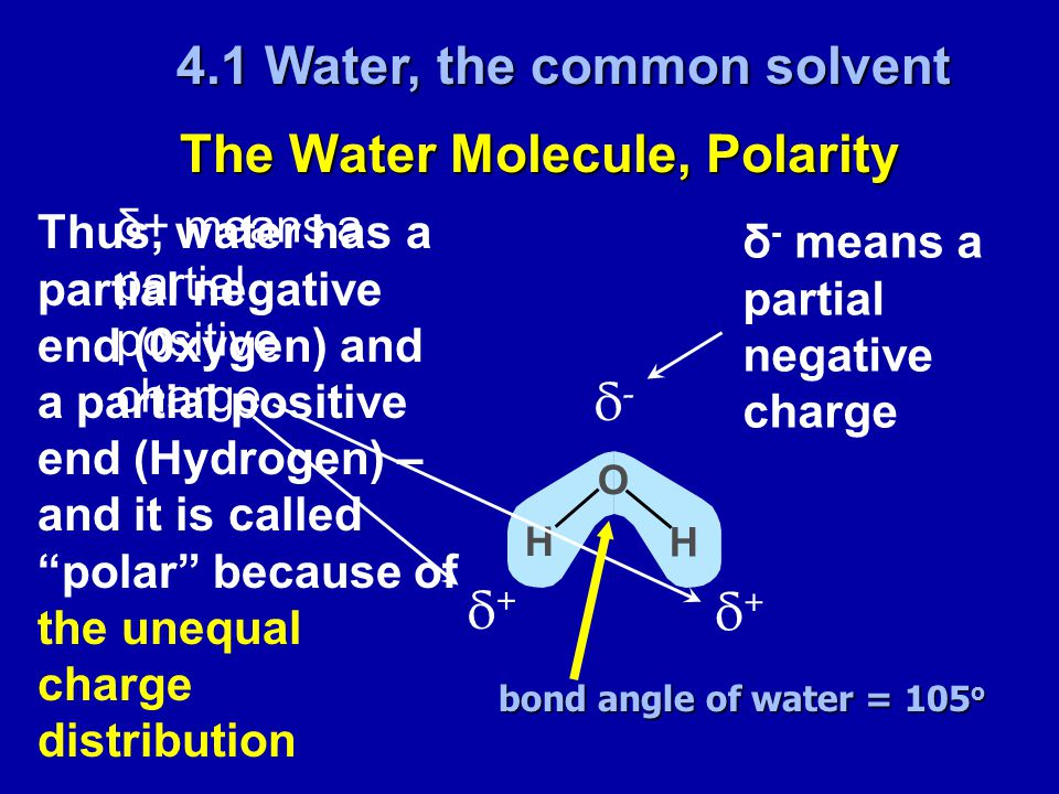 The Water Molecule, Polarity δ-δ- δ+δ+ δ+δ+ H H O δ - means a partial negative charge δ+ means a partial positive charge Thus, water has a partial negative end (0xygen) and a partial positive end (Hydrogen) – and it is called polar because of the unequal charge distribution 4.1 Water, the common solvent bond angle of water = 105 o