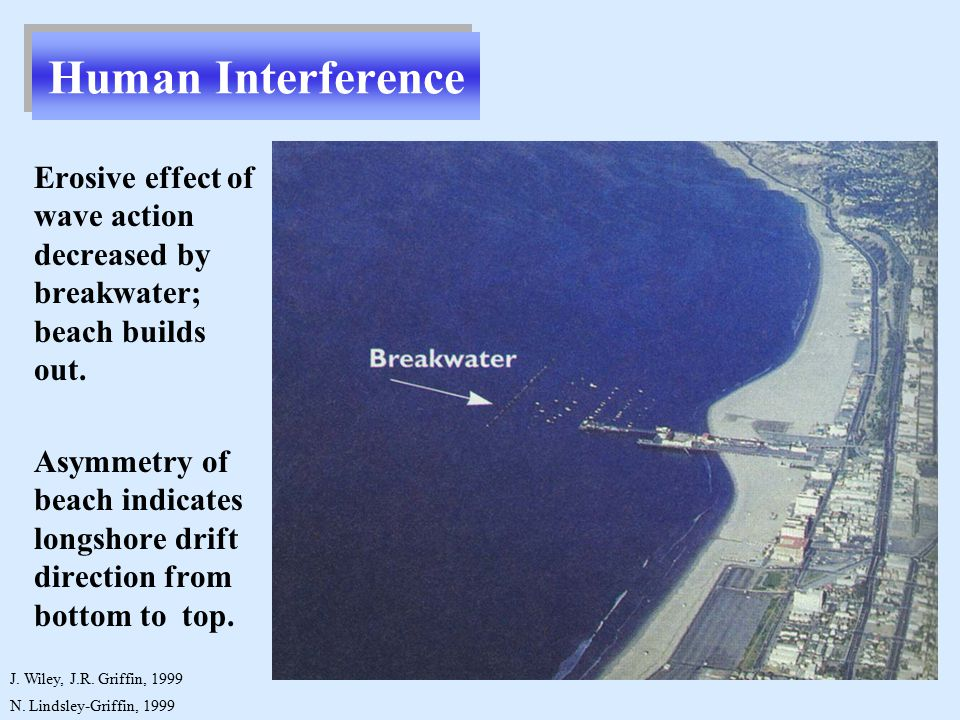 N. Lindsley-Griffin, 1999 Erosive effect of wave action decreased by breakwater; beach builds out.