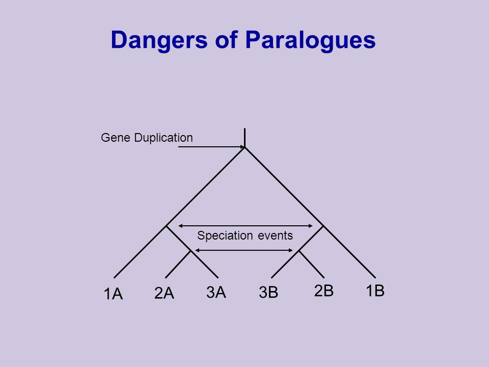 Dangers of Paralogues Speciation events Gene Duplication 1A 2A 3A3B 2B1B