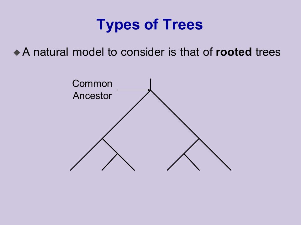 Types of Trees u A natural model to consider is that of rooted trees Common Ancestor