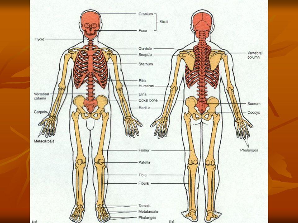 Dorable Michigan University Anatomy Motif - Anatomy And Physiology ...