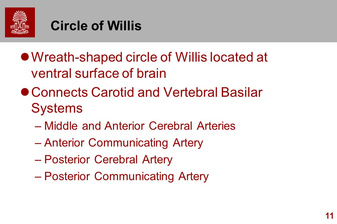 11 Circle of Willis Wreath-shaped circle of Willis located at ventral surface of brain Connects Carotid and Vertebral Basilar Systems –Middle and Anterior Cerebral Arteries –Anterior Communicating Artery –Posterior Cerebral Artery –Posterior Communicating Artery