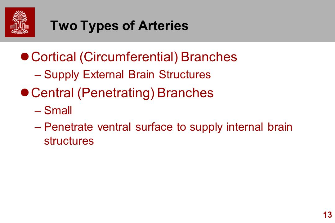13 Two Types of Arteries Cortical (Circumferential) Branches –Supply External Brain Structures Central (Penetrating) Branches –Small –Penetrate ventral surface to supply internal brain structures