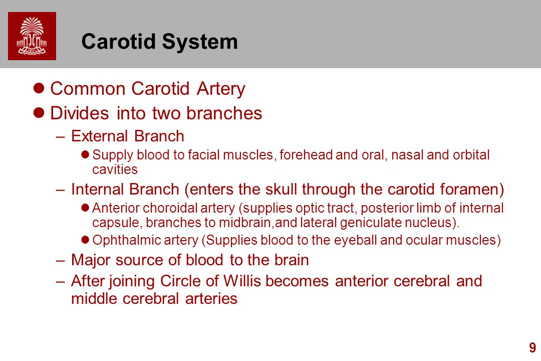 9 Carotid System Common Carotid Artery Divides into two branches –External Branch Supply blood to facial muscles, forehead and oral, nasal and orbital cavities –Internal Branch (enters the skull through the carotid foramen) Anterior choroidal artery (supplies optic tract, posterior limb of internal capsule, branches to midbrain,and lateral geniculate nucleus).