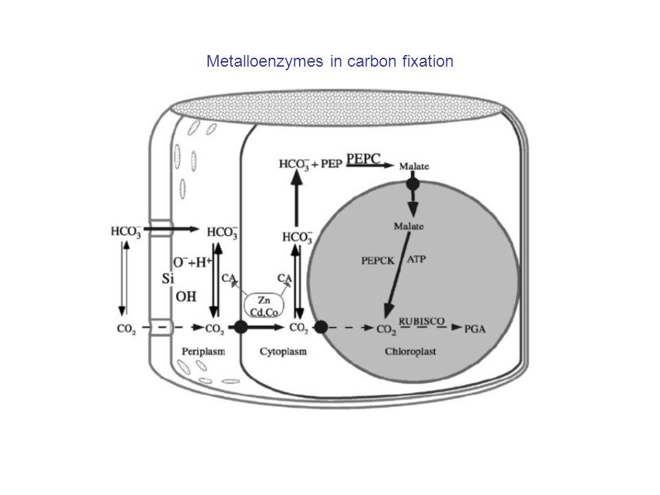 Metalloenzymes in carbon fixation