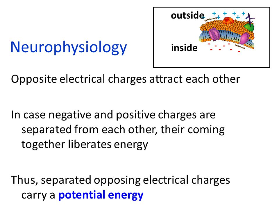 Neurophysiology Opposite electrical charges attract each other In case negative and positive charges are separated from each other, their coming together liberates energy Thus, separated opposing electrical charges carry a potential energy inside outside