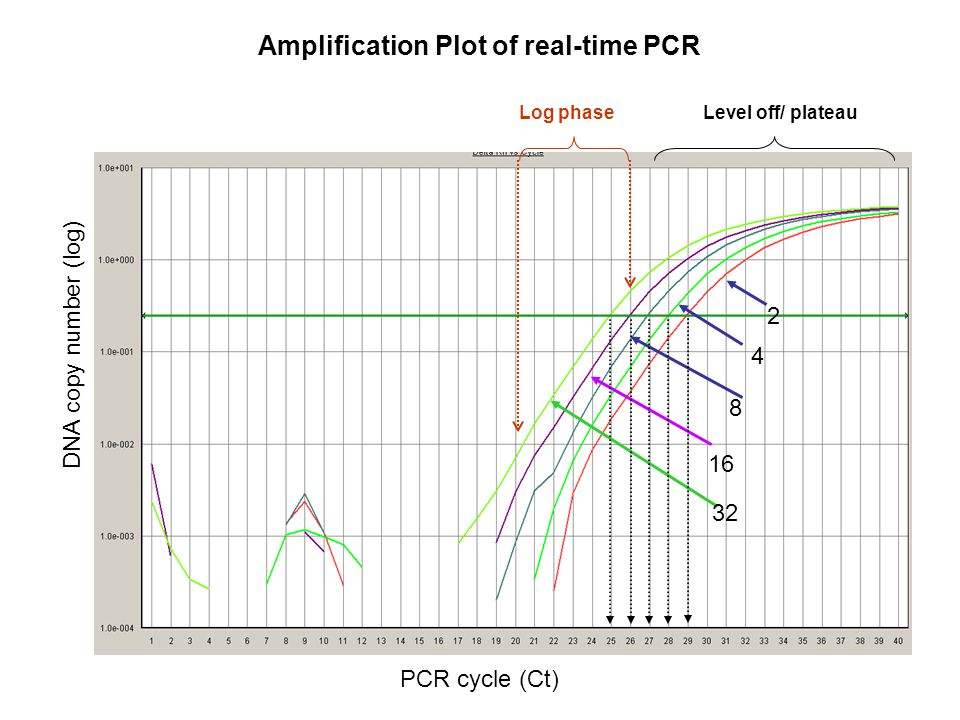 Log phaseLevel off/ plateau Amplification Plot of real-time PCR DNA copy number (log) PCR cycle (Ct)