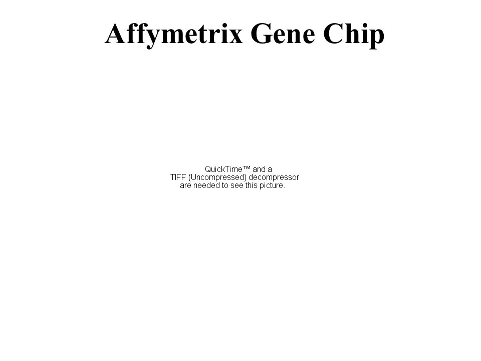 Affymetrix Gene Chip