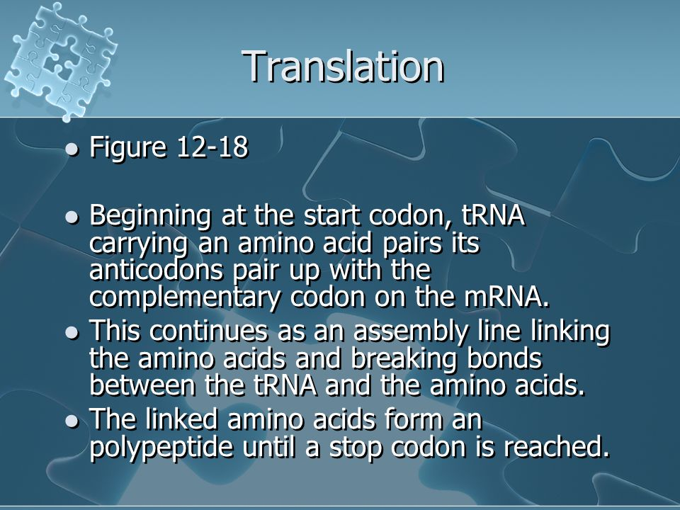 Translation Figure Beginning at the start codon, tRNA carrying an amino acid pairs its anticodons pair up with the complementary codon on the mRNA.