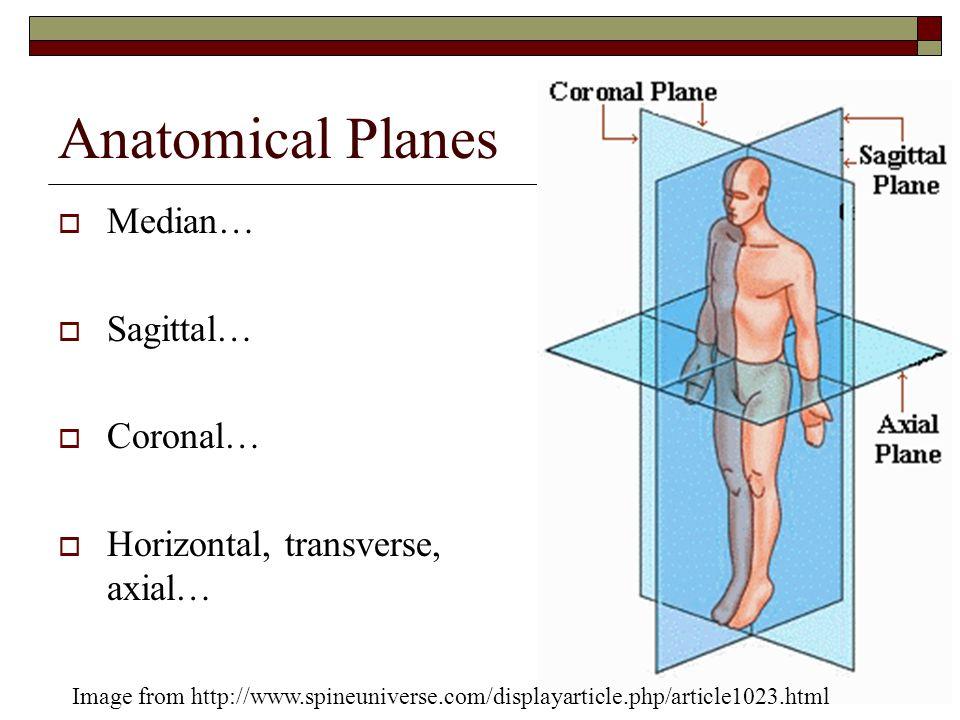 Fancy Median Plane Anatomy Inspiration Anatomy Ideas Yunokifo