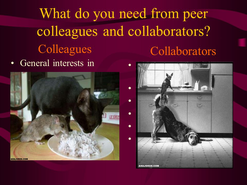 What do you need from peer colleagues and collaborators.