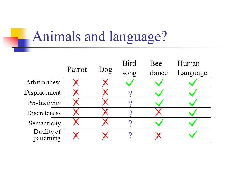 Animals and language.