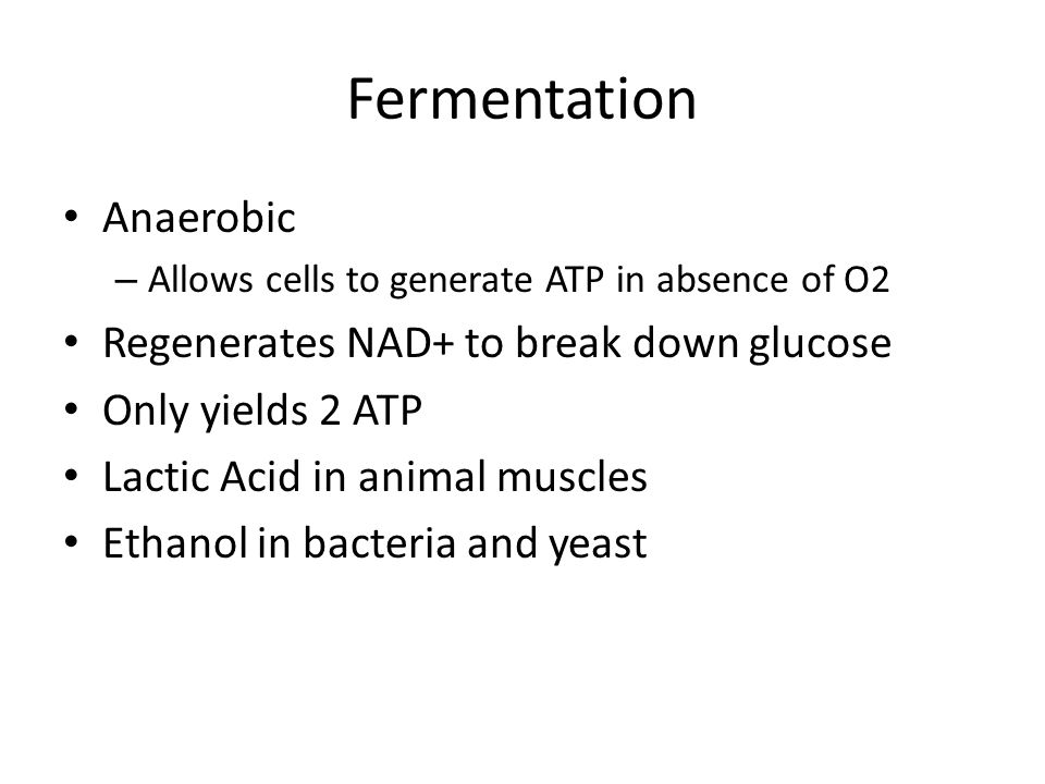 Fermentation Anaerobic – Allows cells to generate ATP in absence of O2 Regenerates NAD+ to break down glucose Only yields 2 ATP Lactic Acid in animal muscles Ethanol in bacteria and yeast