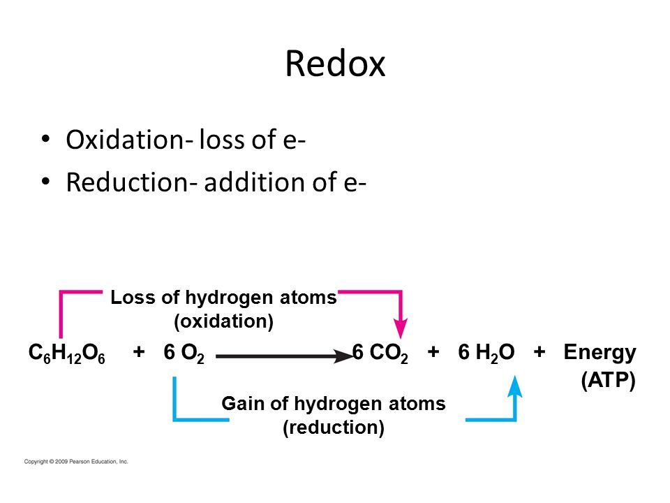 Redox Oxidation- loss of e- Reduction- addition of e- Loss of hydrogen atoms (oxidation) 6 CO H 2 O + Energy Gain of hydrogen atoms (reduction) (ATP) C 6 H 12 O O 2