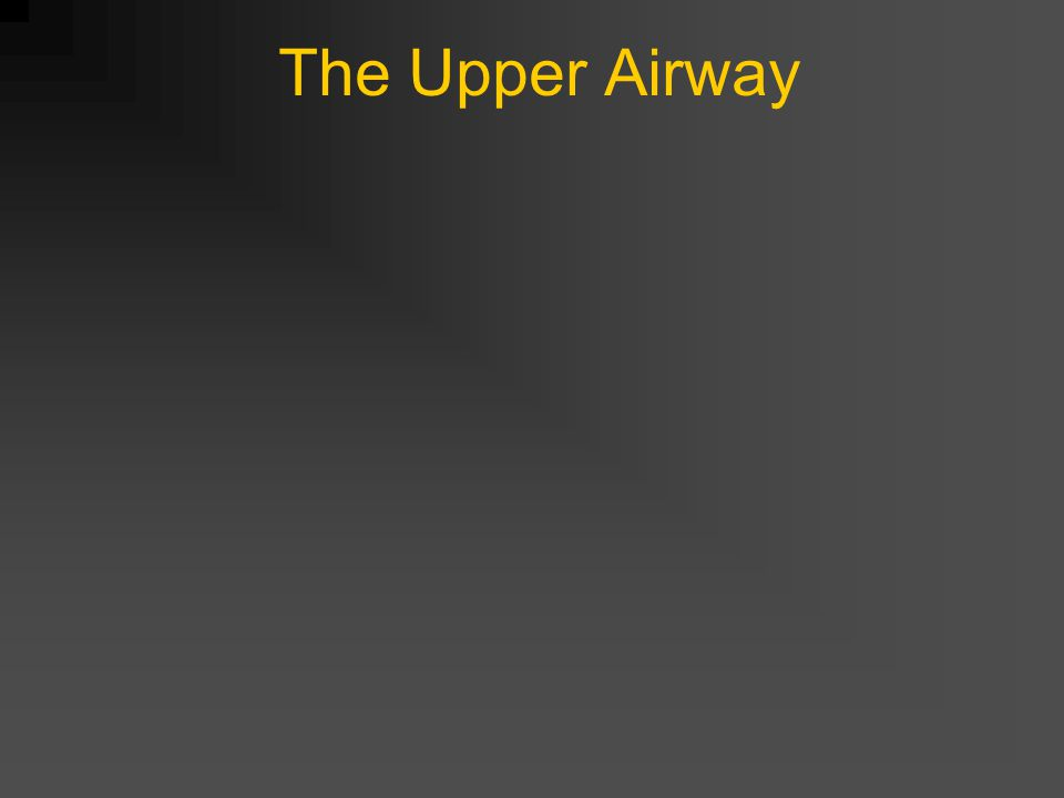 The Upper Airway